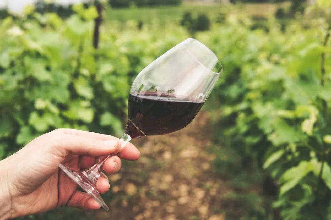 法国迎来葡萄采收旺季,约一场葡萄酒旅行吗?